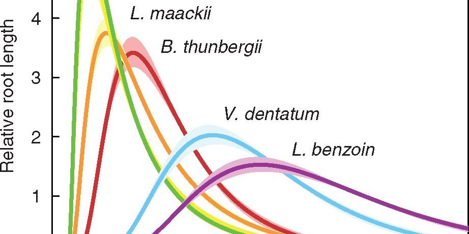 Distributions of fine root diameter, computed on the basis of length, for the species included in the study