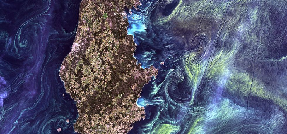 massive congregations of greenish phytoplankton swirl in the dark water around Gotland