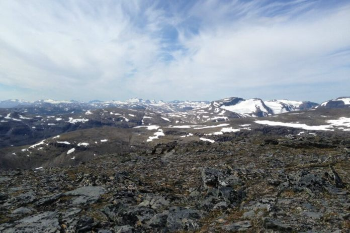 Lichen in the mountains