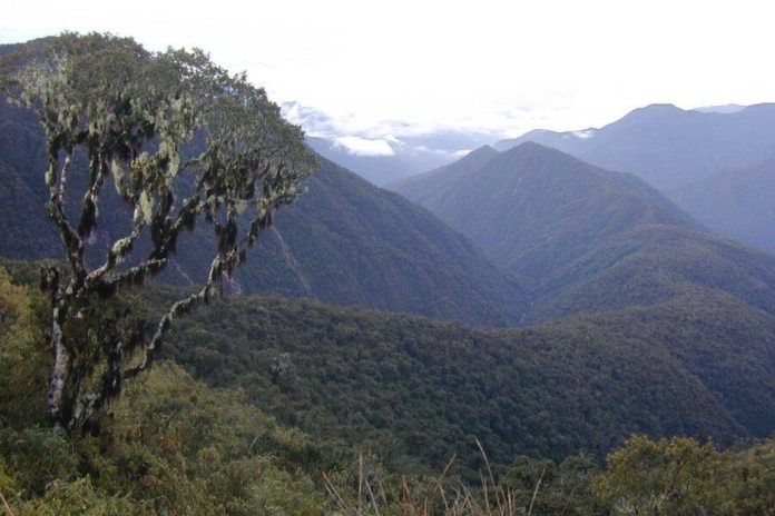 New canopy tree genus Incadendron esseri shown in this altitudinal transect of Manu National Park in Peru.