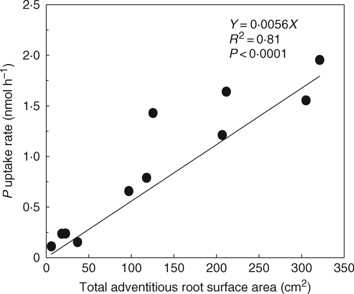 Correlation between total surface area of the aquatic adventitious roots of S. dulcamara and the uptake rates of phosphate under partially flooded conditions.