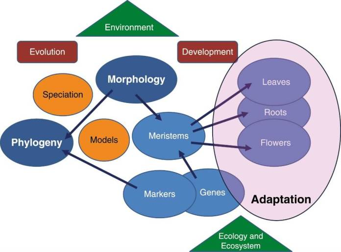 Plant adaptation arises from their morphology, itself a product of evolution and development.