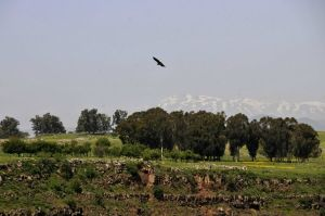 Vulture flying with distant mountains