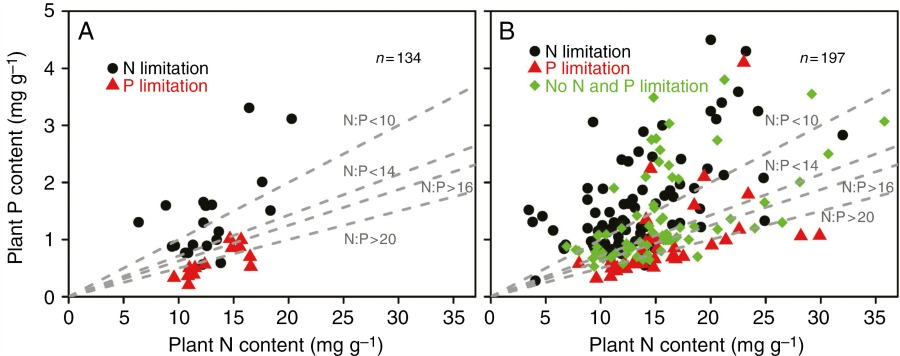 Relationship between plant N and P content in the unfertilized control plots and type of nutrient limitation determined in the fertilization experiments.