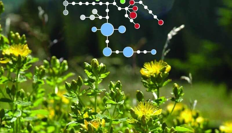 An abstract image of molecular data in plants
