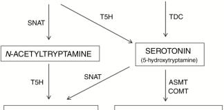 Biosynthetic pathway of melatonin in plants.