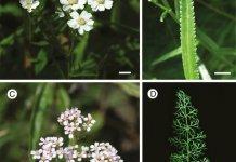 Plant species under study.
