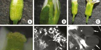 In vivo germination experiment.