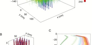 Field-scale simulation ofT. aestivum