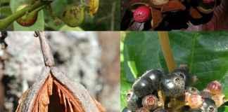 Plants of the Cerrado