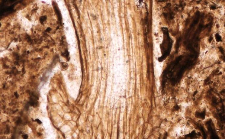 Preserved mosses discovered in Upper Jurassic rocks of Argentinean Patagonia