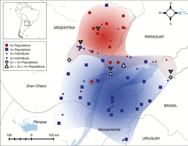 Map displaying all collection localities of P. intermedium and ploidy levels determined in the present study