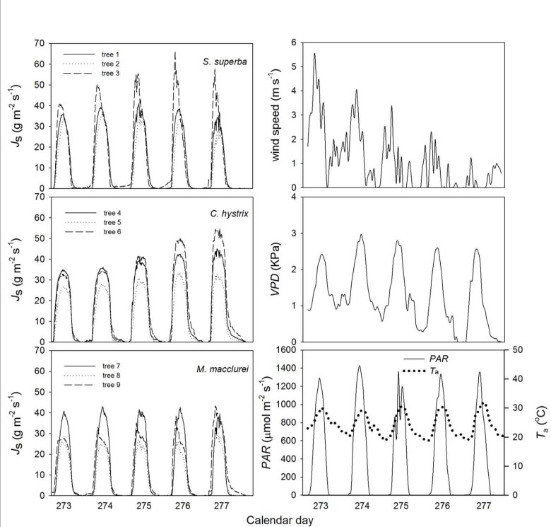 Daily changes in sap flux density in the three examined co-occurring tree species