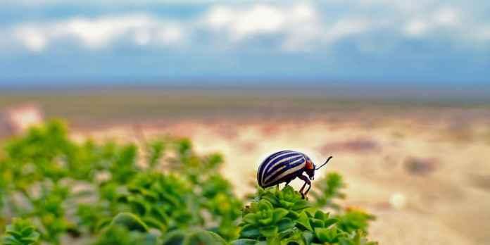 Beetle on a shrub