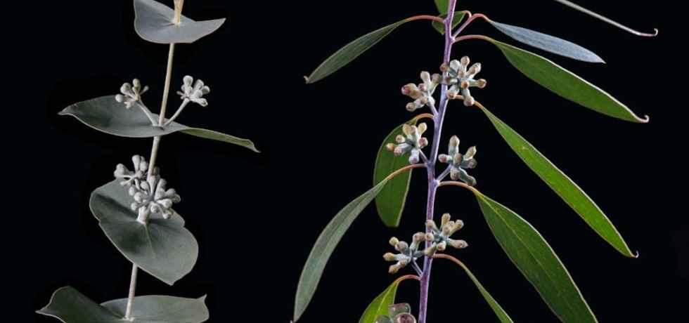 Varying vegetation