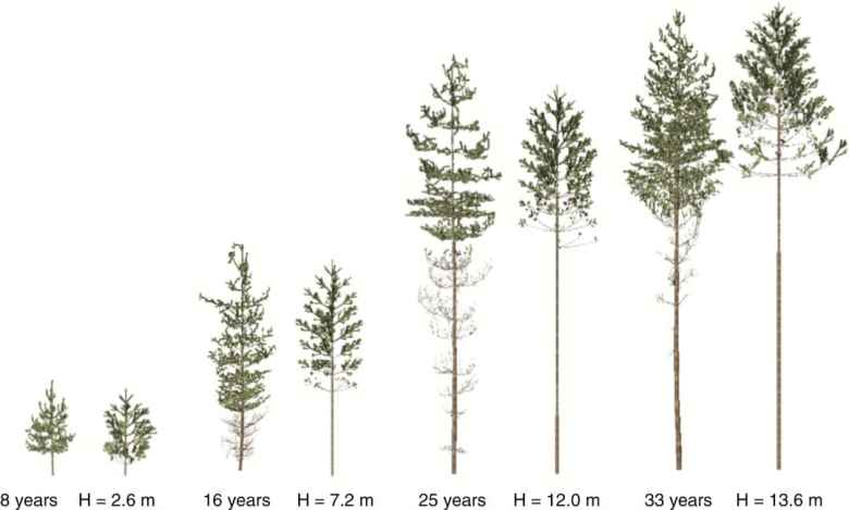 Scanned (left) and best fit trees (right)