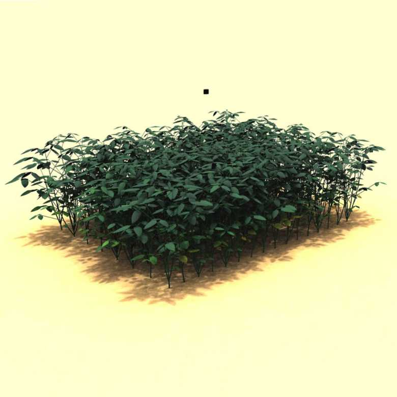 A 3D recreation of a soybean, <em>Glycine max</em> L. Merr., crop canopy generated using a functional-structural plant model in the software GroIMP.