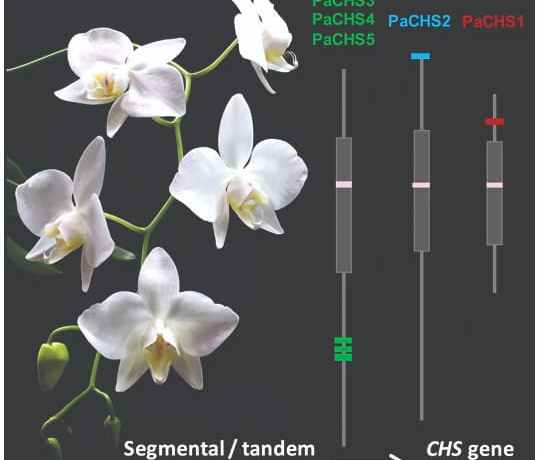 Orchids and genes