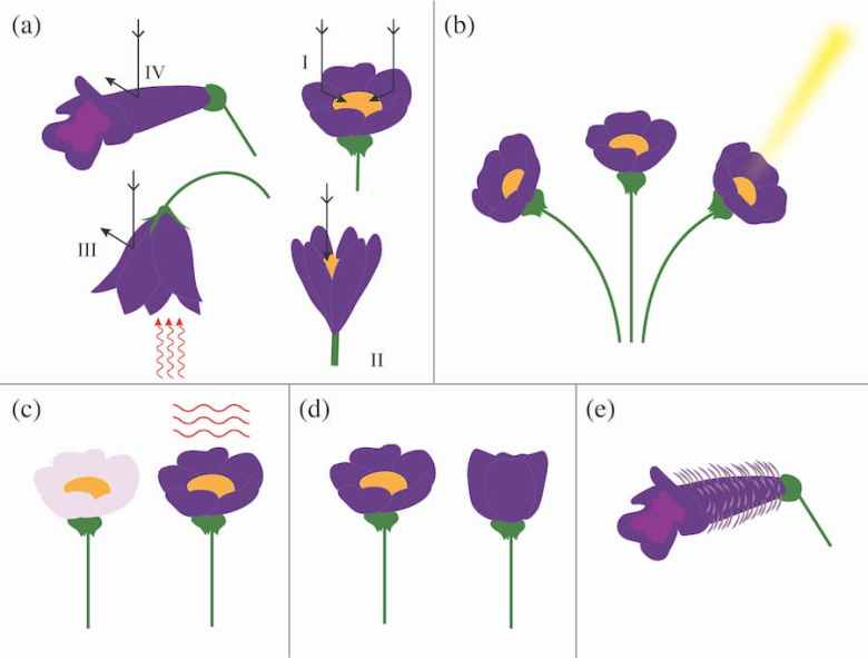 Floral attributes that increase exogenous heat capture.