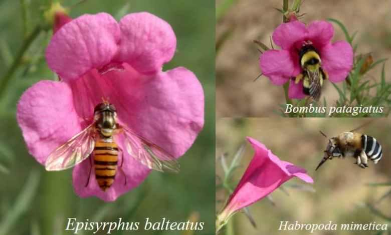 Pollinators visiting flowers.