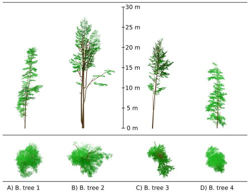Four European beech tree 3D representations reconstructed from TLS data point clouds