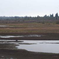 PDX: Tualatin River National Wildlife Refuge
