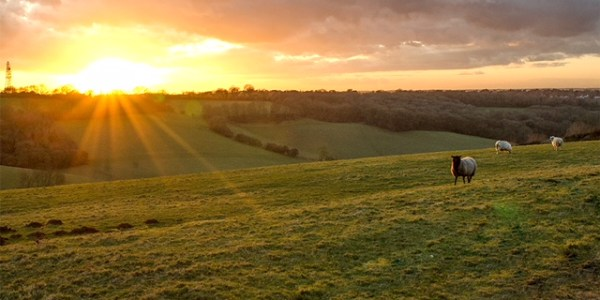Sunset on Botley Hill