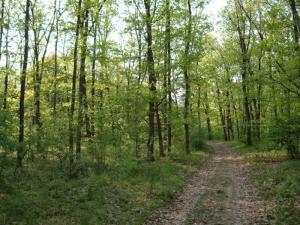 padure, stiri, botosani, fond forestier