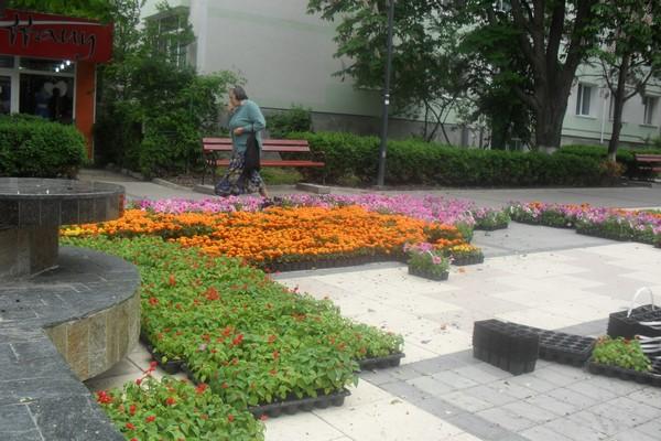 flori municipiu