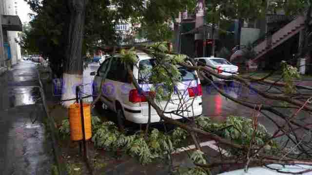 masini avariate de copaci rupti - botosani