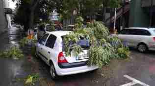 masini avariate de copaci rupti -botosani