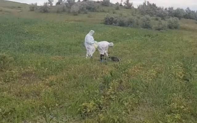 mistret gasit mort pe camp la Dangeni- Botosani