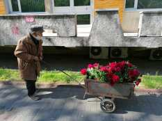 batra cu flori2