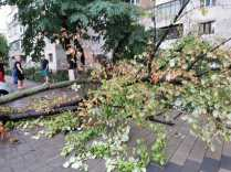 furtuna, copac peste masina, botosani (2)