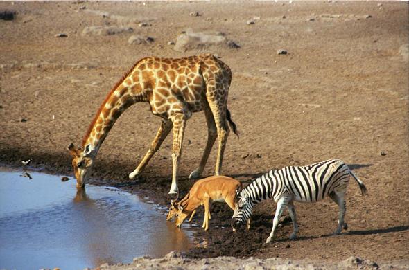 Image result for botswana
