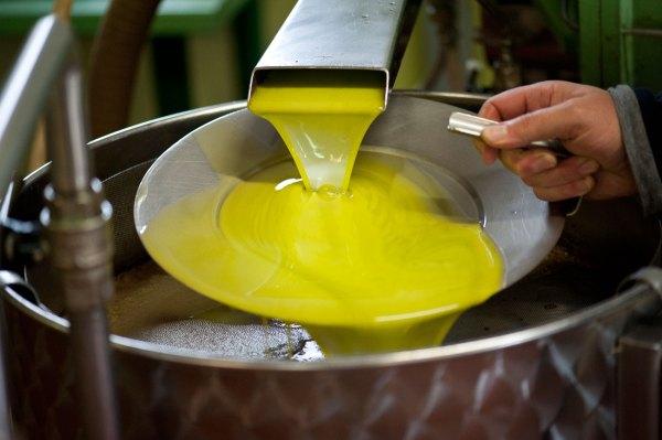 Olio nuovo a Montepulciano