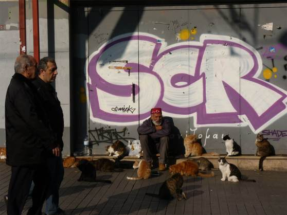 Istanbul - chats