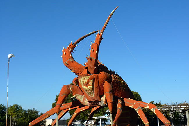 Kingston et son homard géant