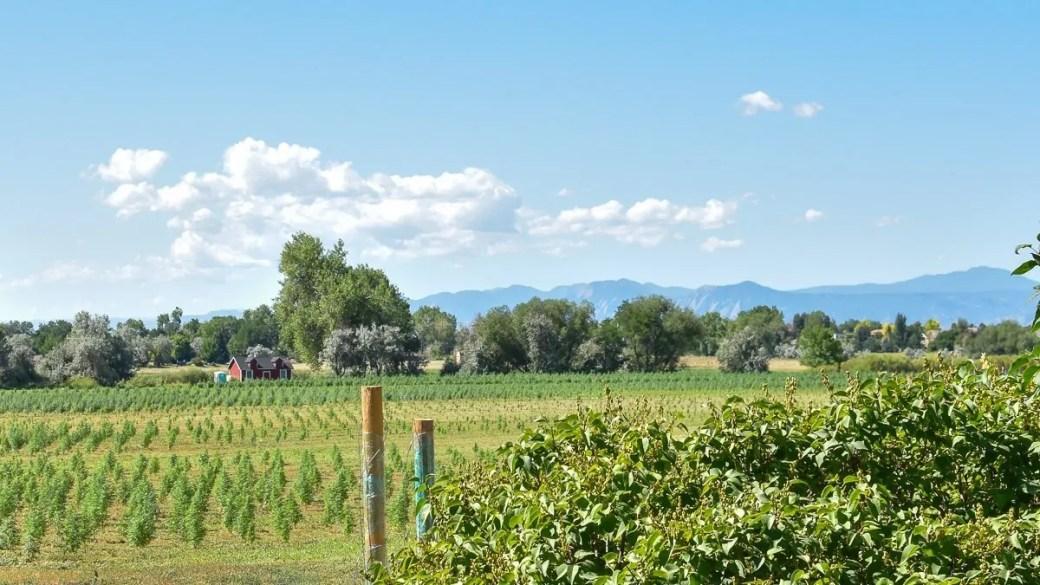 The WAAYB Organic farm, a USDA Certified Organic family farm in Colorado