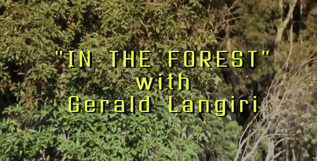 In The Forest with Gerald Langiri: A Lot of Monkey Business