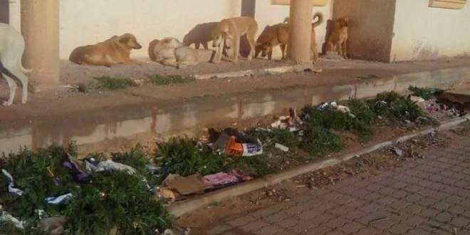 """سكان حي غزة"""" بطريق الجزائر"""" يناشدون السلطات المحلية من آفة الكلاب الضالة.."""
