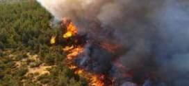 اعوان الغابات والحماية المدنية  يتدخلون عدة مرات لاخماد حرائق بغابة عين اغراب