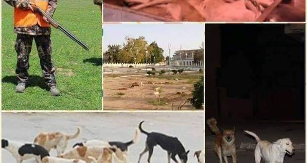 حصيلة عملية مكافحة الكلاب الضالة ببوسعادة ونواحيها