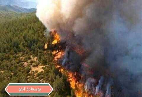 حريق مهول بمنطقة عين مغنية بغاية عين اغراب