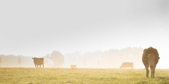 landscape-fog-meadow-mist-WEB