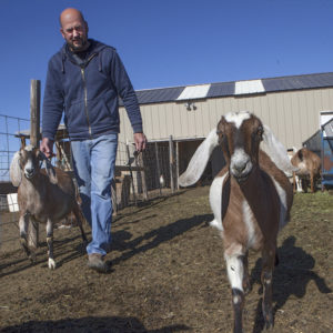 Milking time at the Ugly Goat farm in Keenesburg.