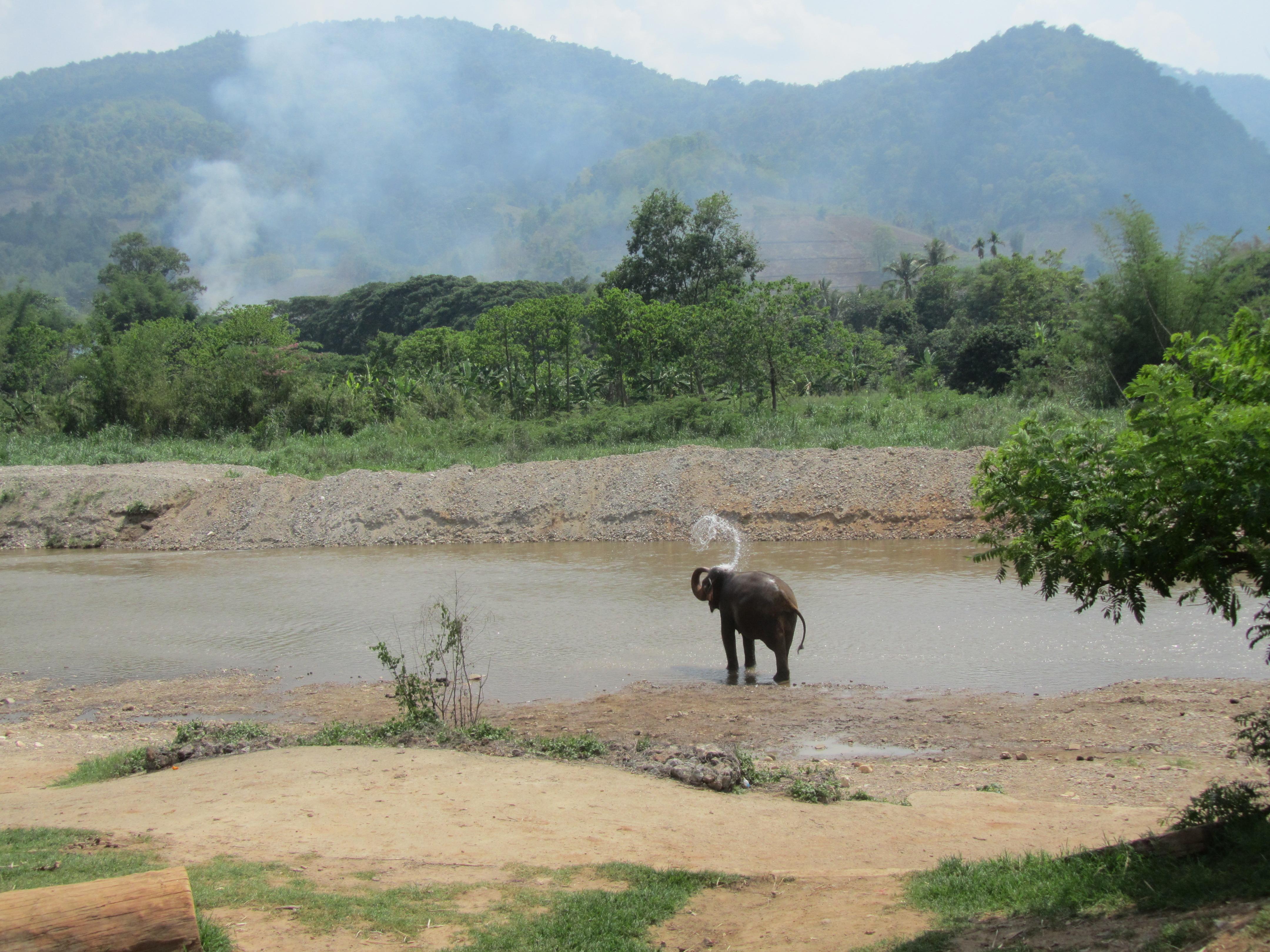 Mae Kham Paan at Elephant Nature Park