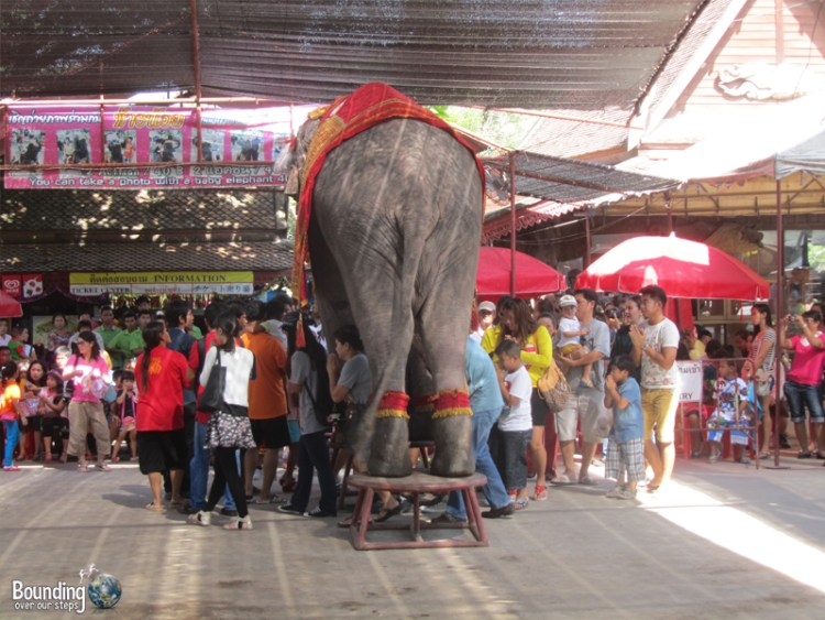 People walking under a bull elephant