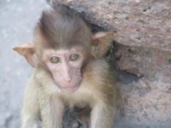 Cute monkey in Lopburi