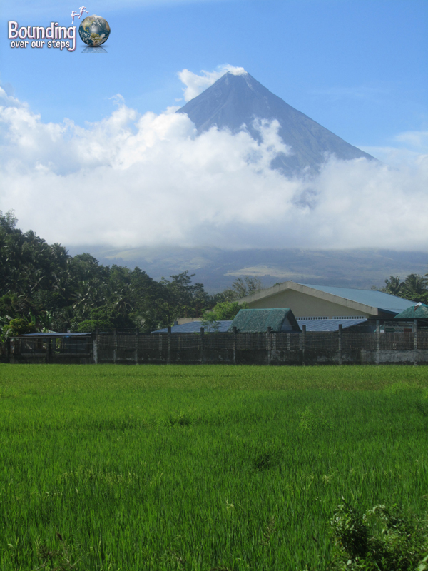 The beautiful Mt. Mayon behind the bright green of a rice paddy